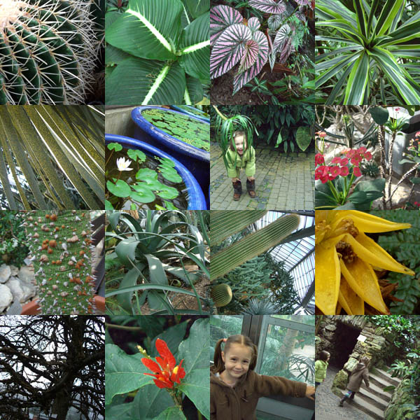 Palmengarten2
